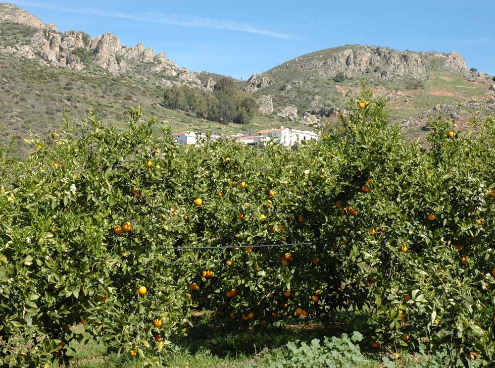 Holidays houses in Malaga in farm of ecological citrus